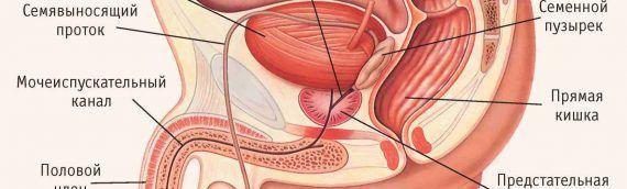 Доброкачественная гиперплазия предстательной железы. Рак простаты