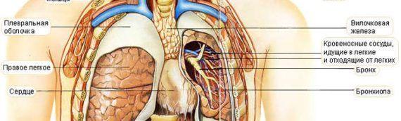 Рак вилочковой железы (тимуса) – виды, симптомы, лечение