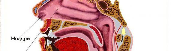Злокачественные опухоли придаточных пазух и носовой полости
