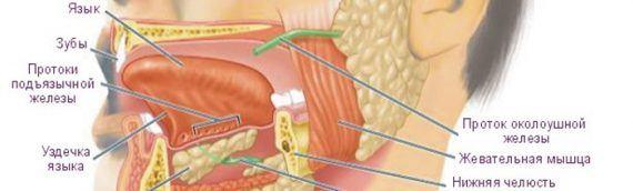 Злокачественные новообразования ротовой полости и слизистой оболочки рта