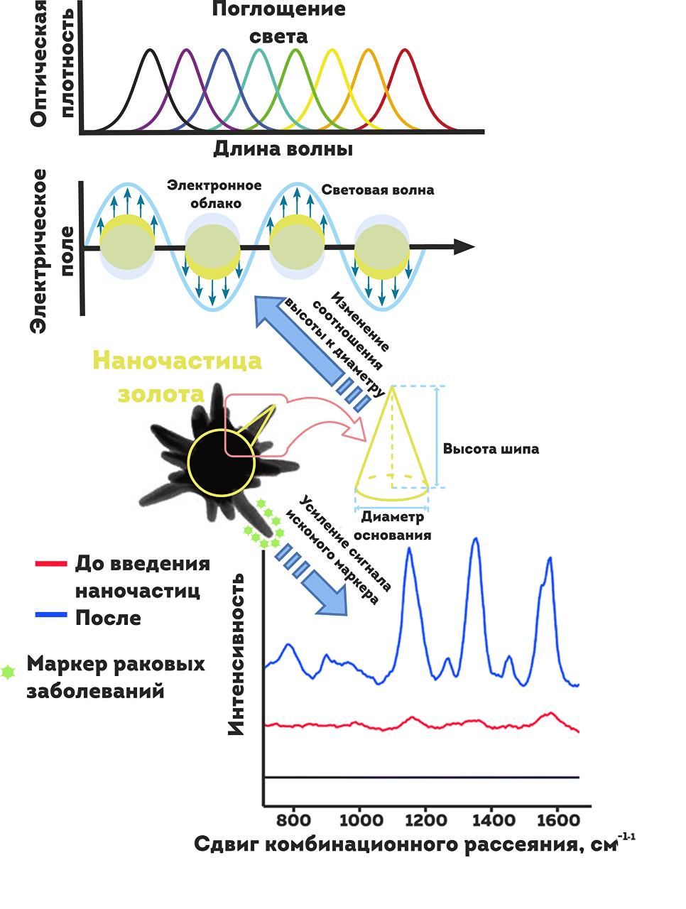 """На схеме показана """"работа"""" золотой наночастицы внутри опухоли"""