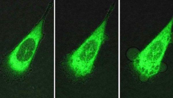 Учёные создали нанороботов, которые убивают рак