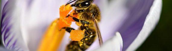 Российские ученые раскрыли противораковые свойства пчелиного яда