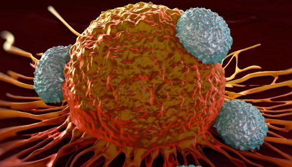 Иммунотерапия рака