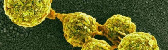Причина рака — грибы, которые нас едят