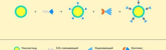 Российские ученые создали универсальный «конструктор» лекарств от рака